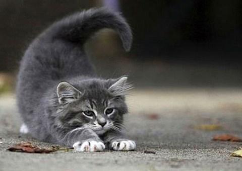 Galería: Los 12 gatos del Zodiaco: Escorpio