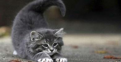 Los 12 gatos del Zodiaco