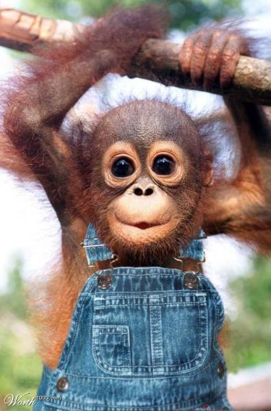 მაიმუნის წელი