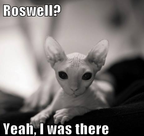 cat roswell