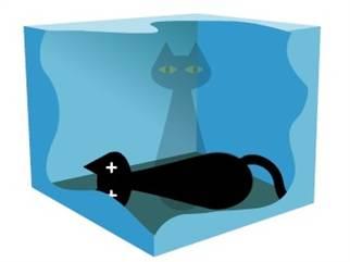science-cat-720p.blocks_desktop_tease