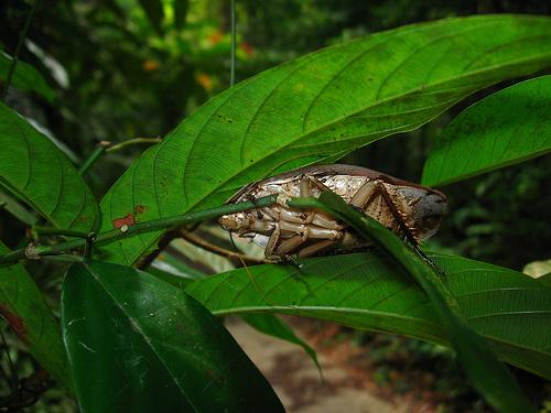 Uma barata (Blattaria) em seu ambiente de adaptação natural (fonte: Flickr).