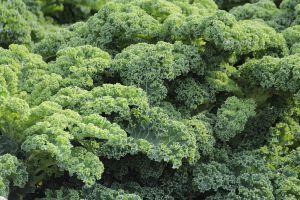 Boerenkool is een bron van vitamine A