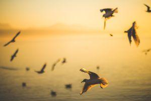 Zo vrij als een vogel door e-mens-cipatie van Treesje