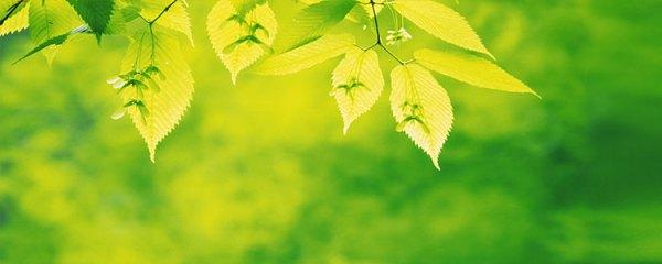 Зеленый цвет в психологии