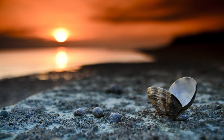 Beach Sunset Landscape Shells Sea Sand Pebbles Desktop Wallpaper