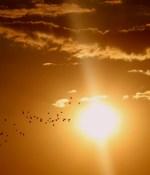 sun or Surya horoscope kundli Elon musk money wealth life predictions
