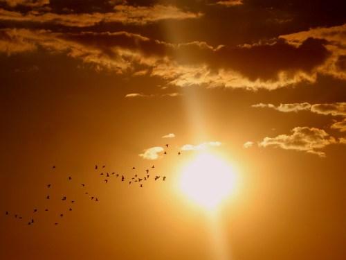 sunset-sun-ascendant sun states surya avasthas horoscope narendra modi predictions