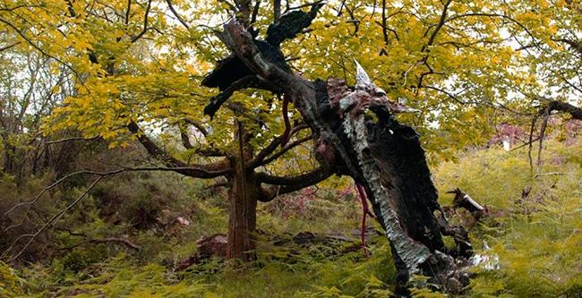 el bosque encantado de beyu pen