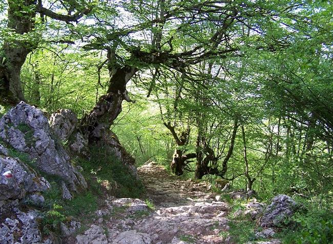 senda del arcediano en asturias itinerario