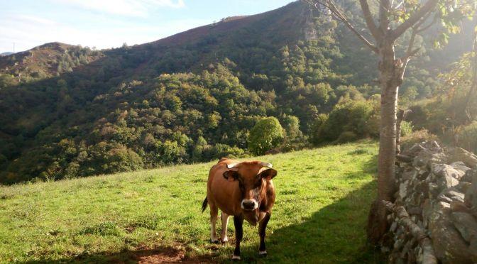 6 cosas qué ver en Belmonte de Miranda y dónde alojarse