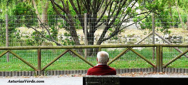 Image result for parque isabel la catolica valla electrificada
