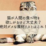 猫が人間の食べ物を欲しがるけど大丈夫?絶対ダメな食材リストはこれ!