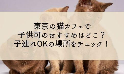 東京の猫カフェで子供可のおすすめはどこ?子連れOKの場所をチェック!