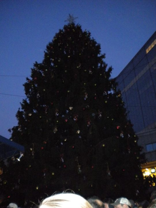 Unlit Boston Christmas Tree
