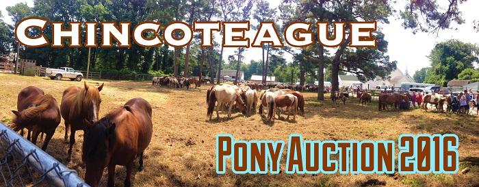pony auction title