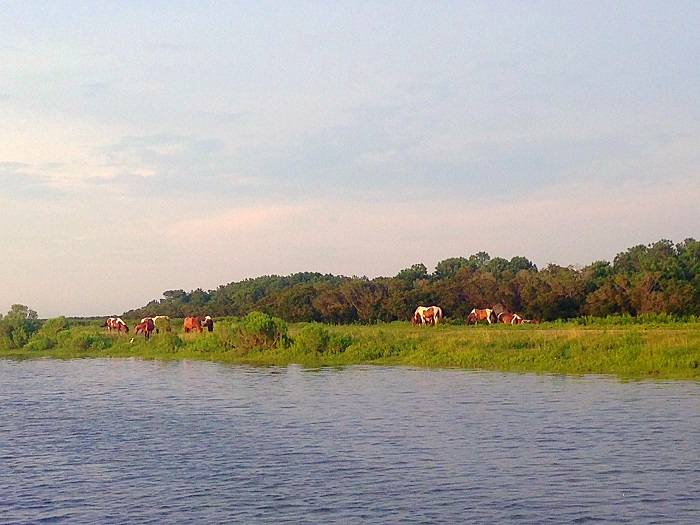 Sunset Pony Viewing with Daisey's Island Boat Cruises — A