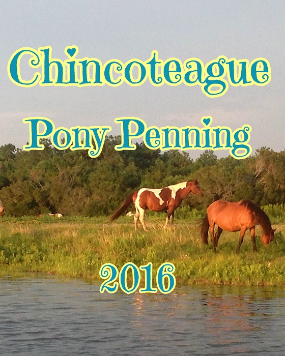 Chincoteague Pony Penning 2016