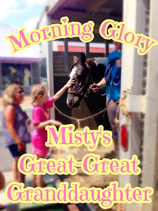 Chincoteague Pony Morning Glory