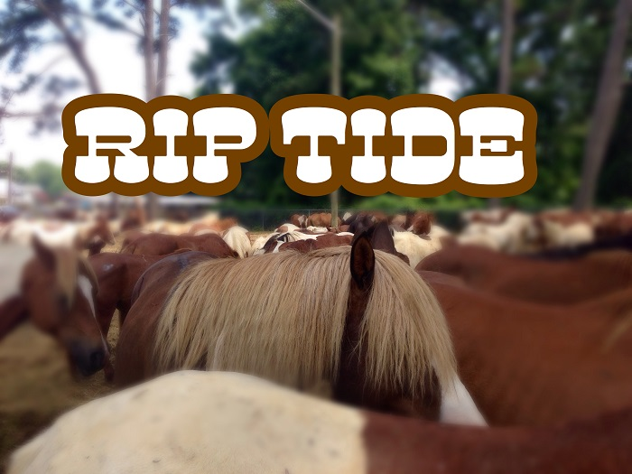 Chincoteague Pony Riptide