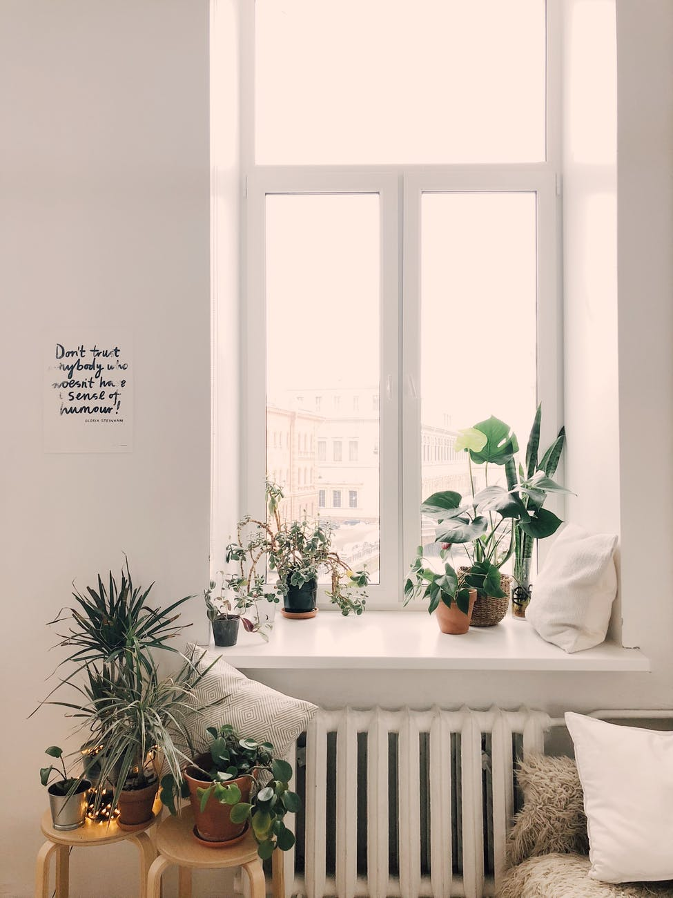 photo of green leaf potted plants on window and stand