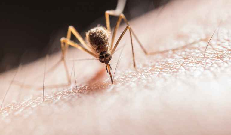 6 Reasons Why Mosquitoes Bite Some People More Than Others