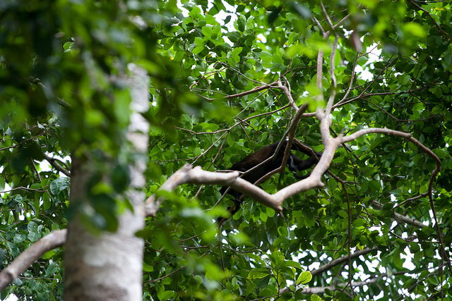 Costa Rica sustainable tourism Monkeys