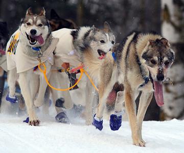 Dog Sledding European Winter Breaks