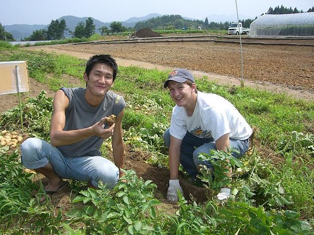 Volunteering and WWOOFing