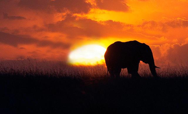 gentle savannas and rolling grasslands
