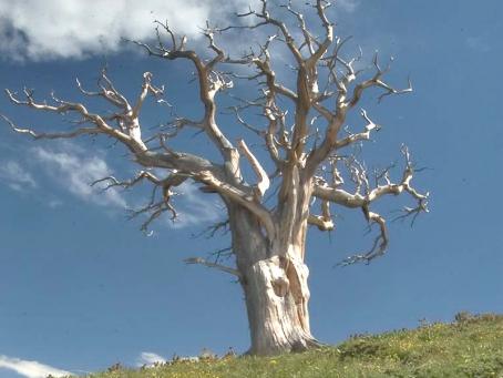 pohon-kering
