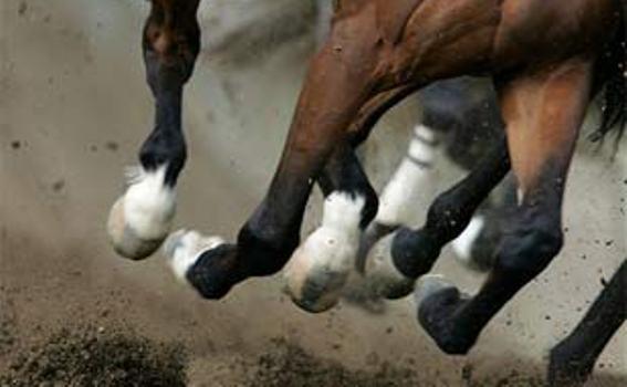 kaki-kuda