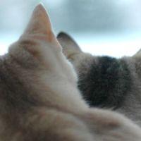 PILNE: Rząd przeznaczy 500 zł na drugiego i każdego kolejnego kota w rodzinie