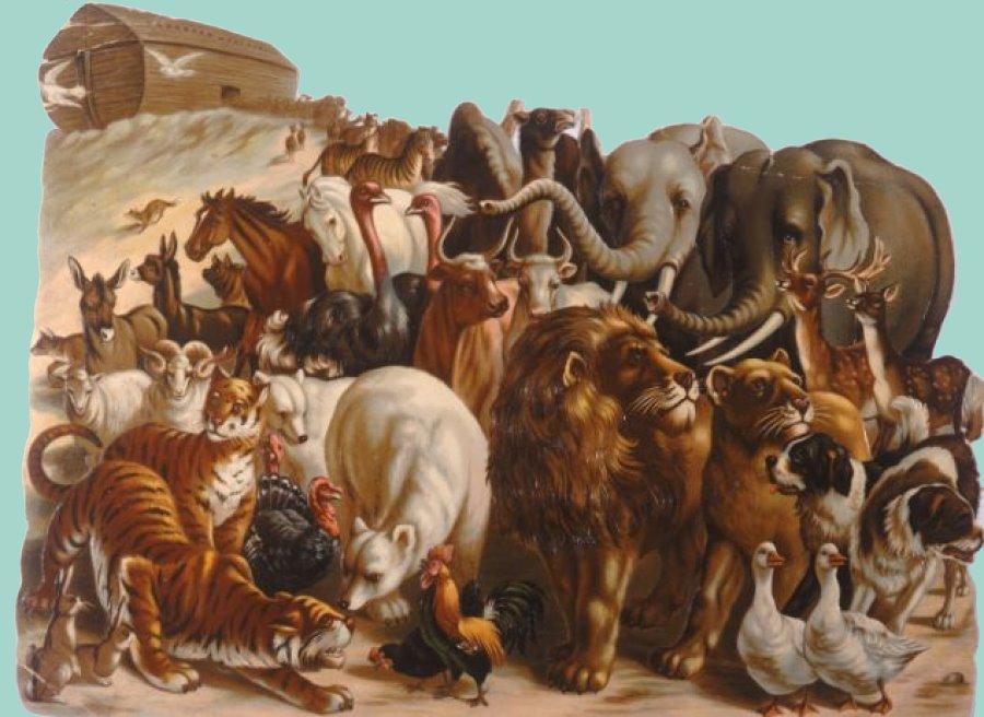 állatok a Teremtésben