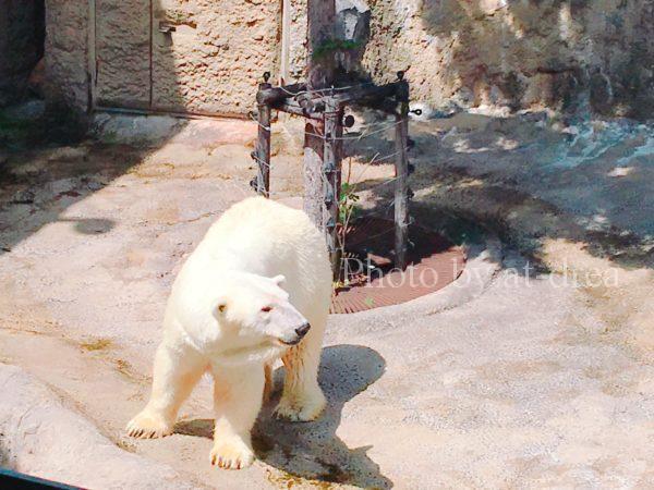 滋賀から北海道家族旅行 旭山動物園