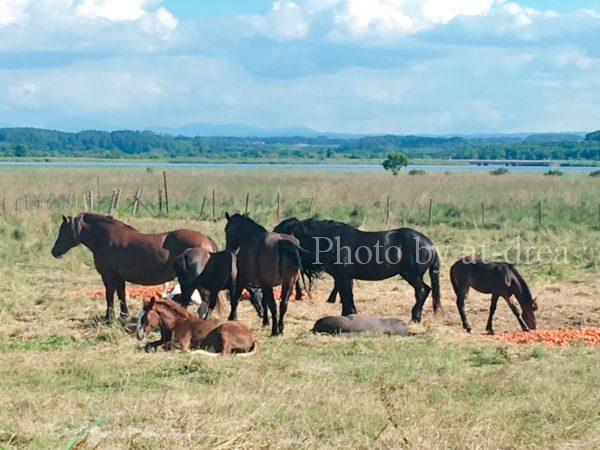 北海道 馬たち