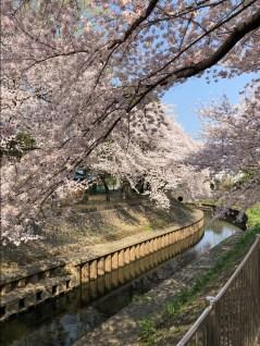 Zenpukujigawa Park