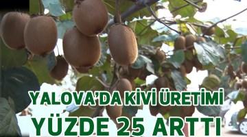 YALOVA'DA KİVİ ÜRETİMİ YÜZDE 25 ARTTI