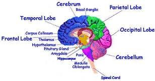 Brain Metaphysic - Recorded Radio Show | Atam.Org