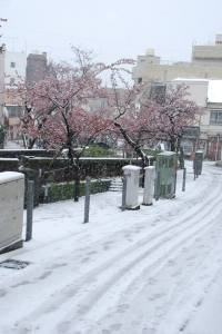 雪糸川さくら今井