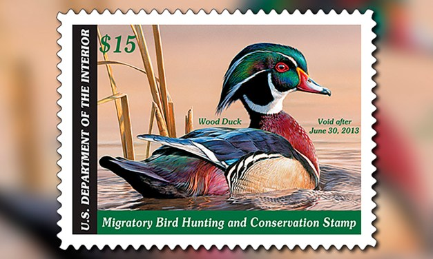 Artists Wanted for California Duck Stamp Art Contest