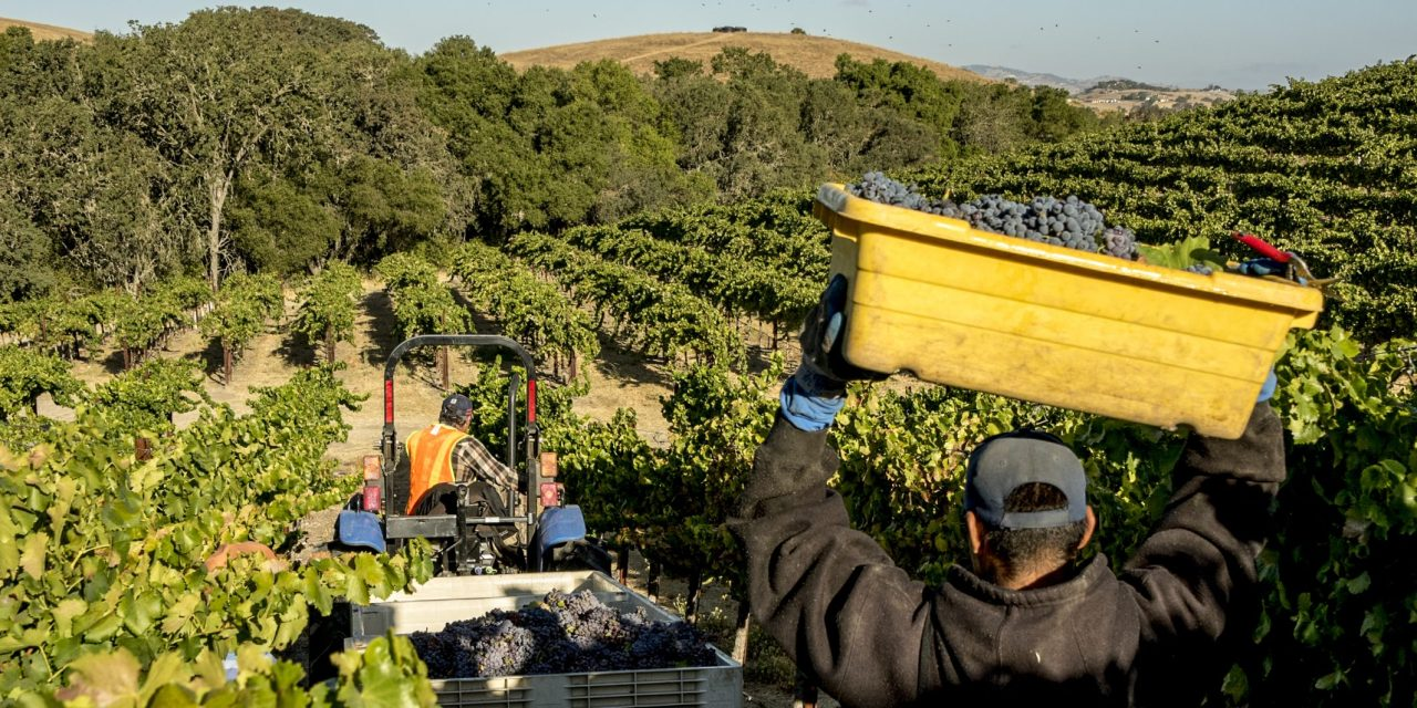 PRWCA: 2020 Paso Robles Wine Vintage Set to be Most Memorable on Record