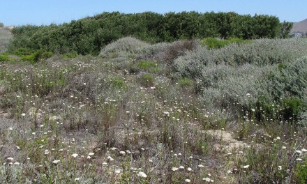 San Luis Obispo Botanical Garden Focuses on Restoring Native Habitat
