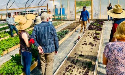 Templeton Hills Community Farm Celebrates First Anniversary