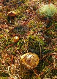 a little mushroom family