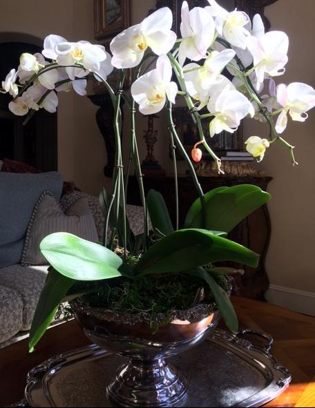 orchid9.jpg
