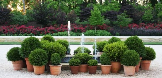 French topiaries 2