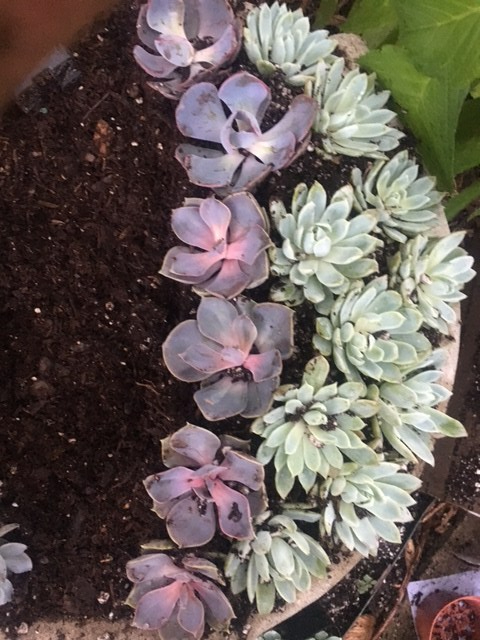 succulent-pattern-5.jpg