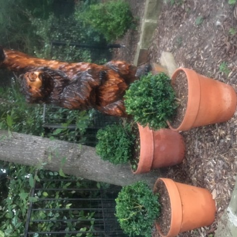 topiary 7