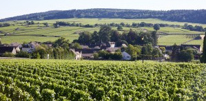 The land in Burgundy France.